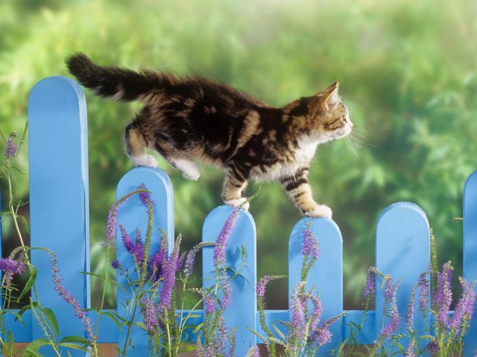очень сильно линяет британский кот что делать